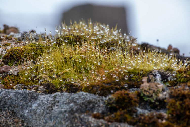 Moss & Lichen Scotland Tadaa Community Beauty In Nature Close-up Day Dew Drops Grass Green Color Growth Land Moss Nature No People No People, Outdoors Plant Rock Rock - Object Selective Focus Solid Sunlight Surface Level Tranquility Water