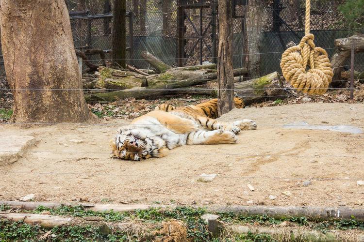 Cat resting in a zoo