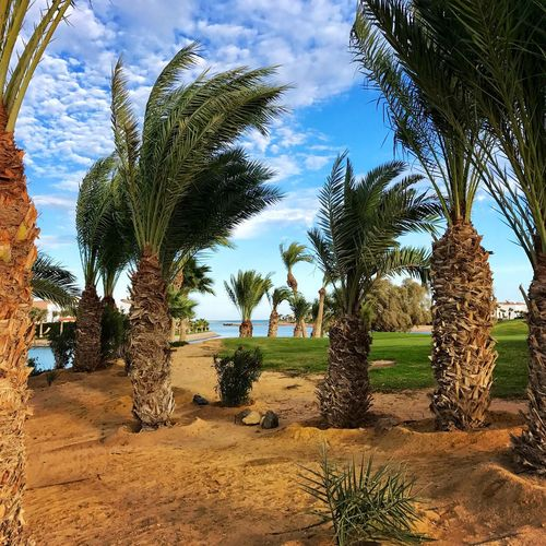 El-Guna El-Gouna El Guna El Gouna Steigenberger Hotel Rotes Meer Red Sea Palmen Palms Lagune Lagoon © MJ ® Palm Tree Tree Nature Sand Growth No People Scenics Outdoors Arid Climate Sky Day Cloud - Sky Landscape Beauty In Nature Cactus