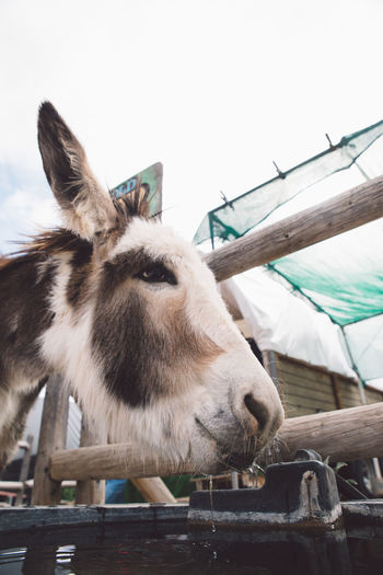 Low Angle View Of Donkey By Fence Against Sky