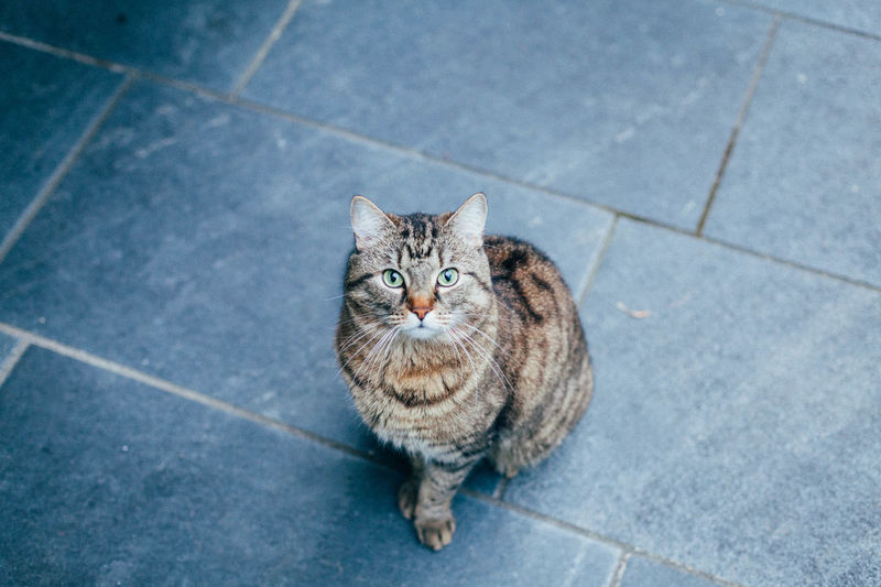 Animal Themes Cat Domestic Animals Domestic Cat Looking At Camera Outdoors Pets Portrait