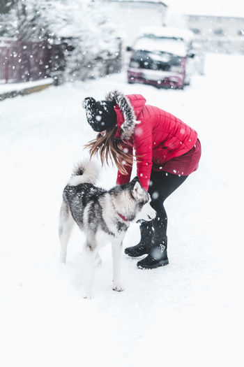 Husky Snow Winter Cold Temperature Canine Dog Domestic Pets Animal Themes Mammal Domestic Animals Animal One Animal Clothing Vertebrate White Color Nature Field Warm Clothing Day Snowing Outdoors