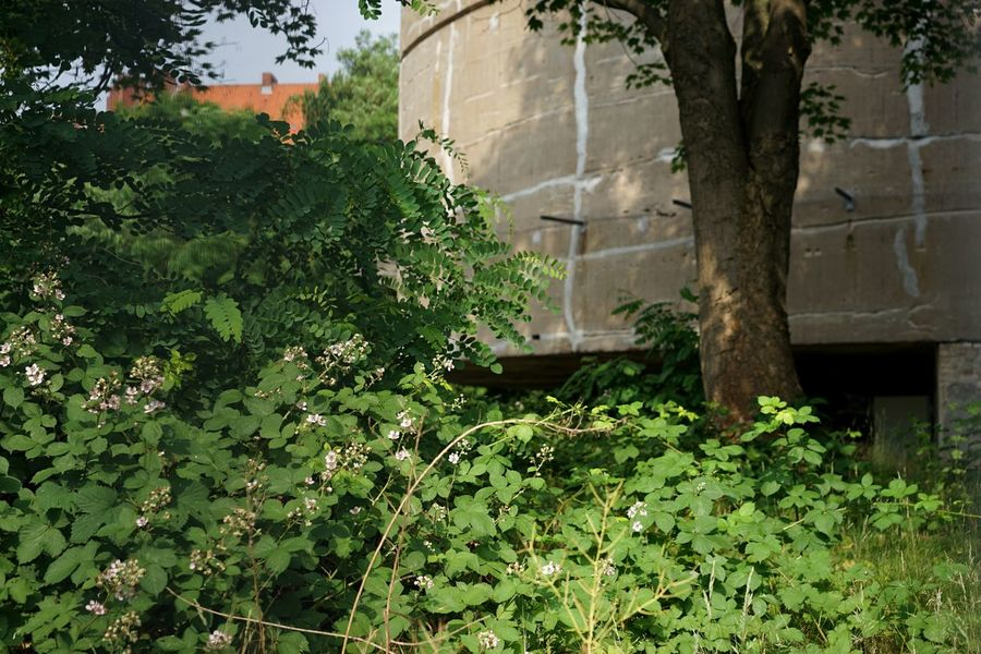 Remnants of Insanity Germania Nazi Building Historical Building Plant Growth Green Color Architecture Nature Built Structure Day Building Exterior No People Tree Sunlight Outdoors Building Flowering Plant
