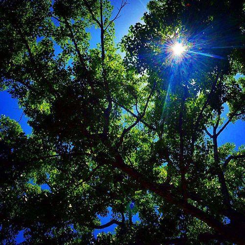 Ilovenature Eye4photography  Hellosunshine Good Morning! Sunshine Sunrays Sunrise Silhouette Treesandsun Ilovegreen Ilovephotography Blueskies