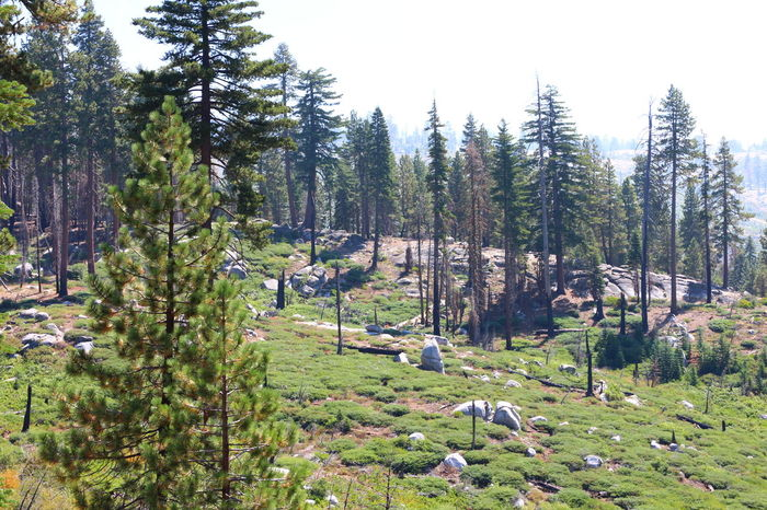 Burning Burnt Burnt Wood Bush Bush Fire California Canon Eos  Fire Forest Landscape Mountains Nature No People Relaxing Sad Sky Sun Trees View Wide Angle Wildlife Wood Yosemite National Park