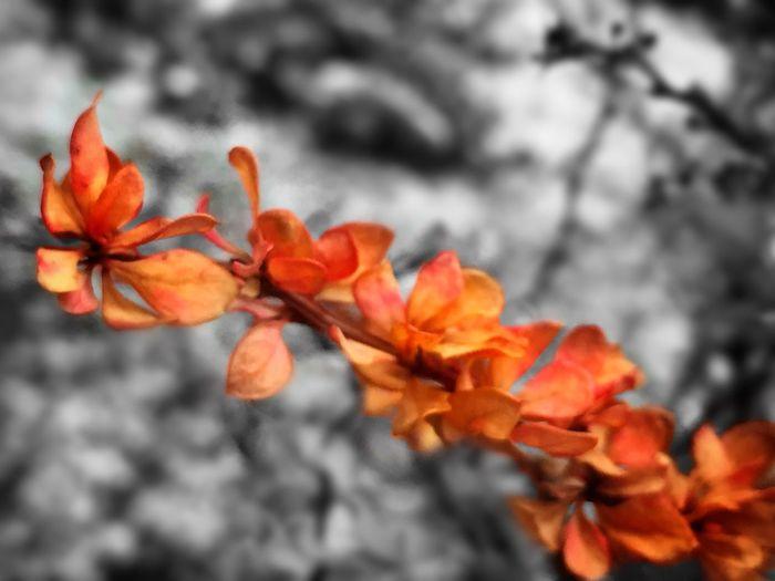 Leaves Winter Bushes IPhone Photography EyeEm Best Edits EyeEm Best Shots Iphoneacademy Iphonephotoacademy Black & White Colorsplash