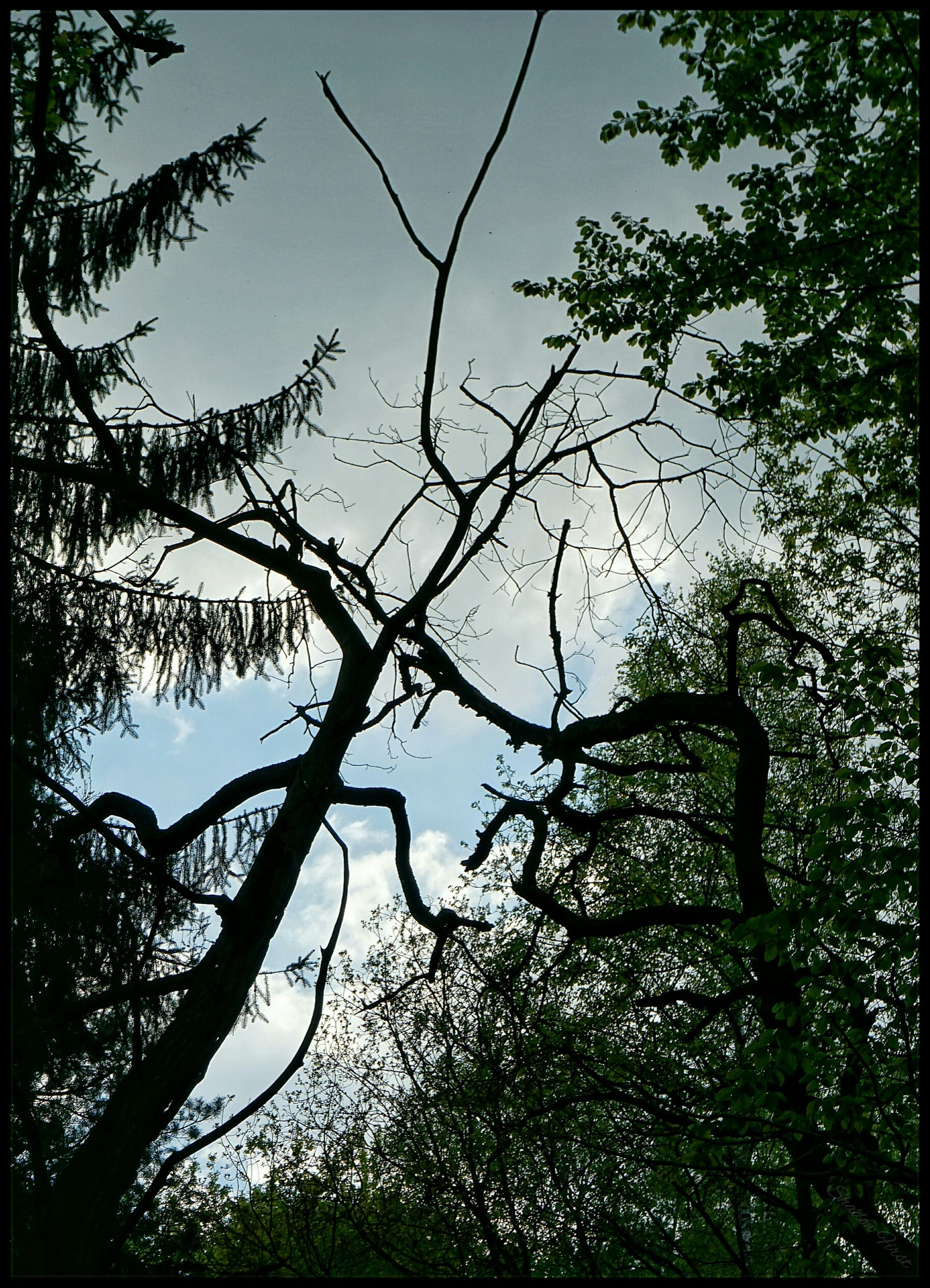 tree, branch, low angle view, growth, clear sky, nature, tranquility, beauty in nature, sky, scenics, outdoors, no people, day, tree trunk, leaf, tranquil scene, green color, sunlight, silhouette, high section