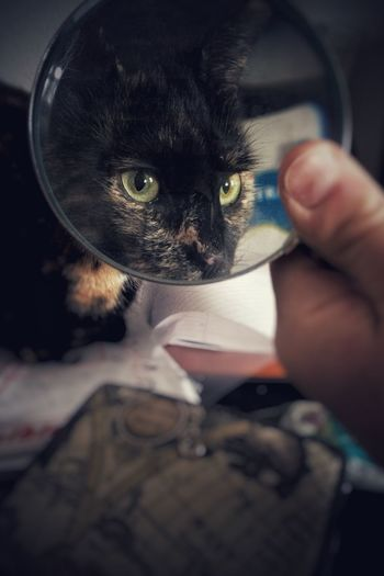 Filly through the magnifier Cat Lovers Snapseed Magnified Caturday