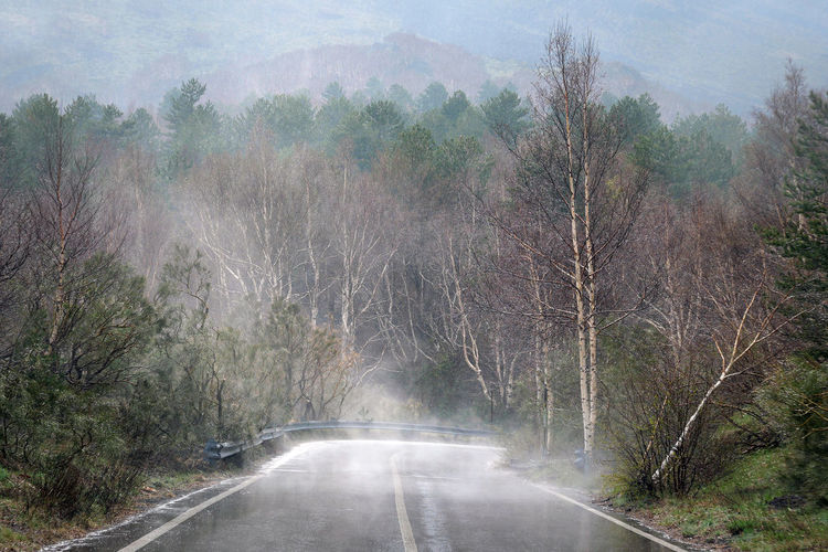 Road amidst trees in forest during foggy weather