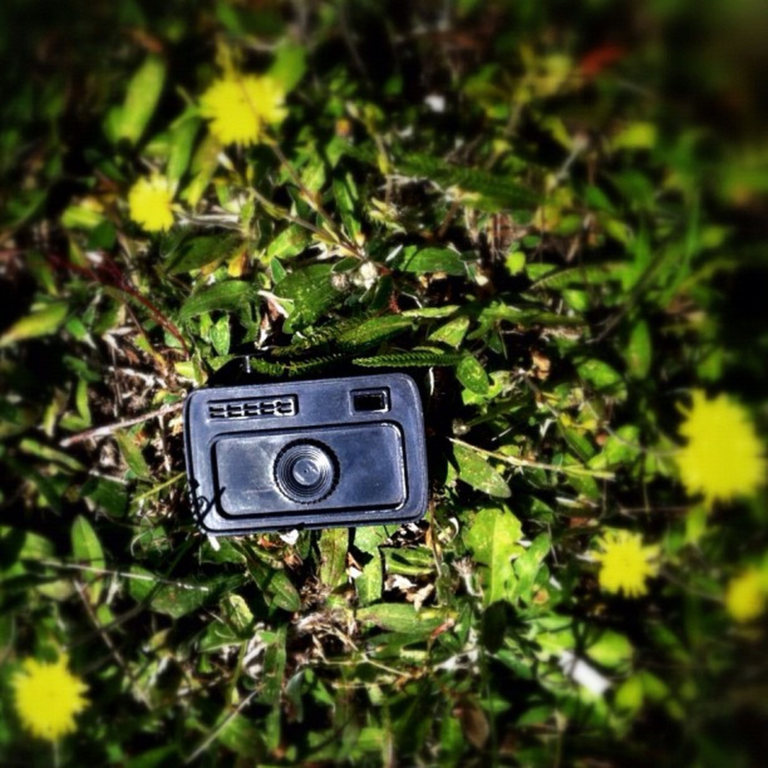 grass, technology, photography themes, field, green color, focus on foreground, growth, close-up, selective focus, plant, communication, wireless technology, photographing, camera - photographic equipment, nature, grassy, one person, flower, day, high angle view