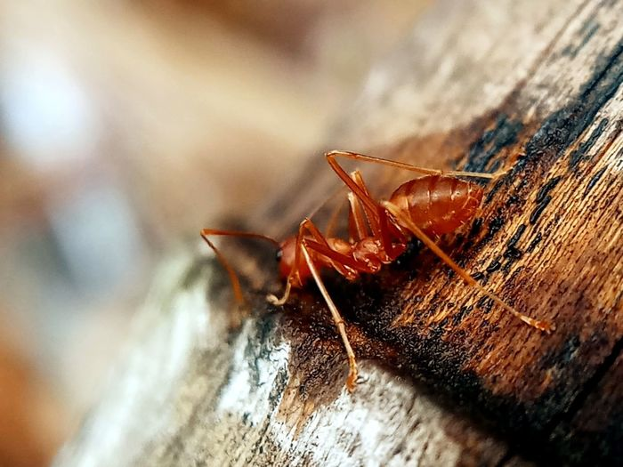 Animal Body Part Animal Wildlife Animals In The Wild Close-up Day Focus On Foreground High Angle View Insect No People One Animal Outdoors Rough Selective Focus Wood Wood - Material