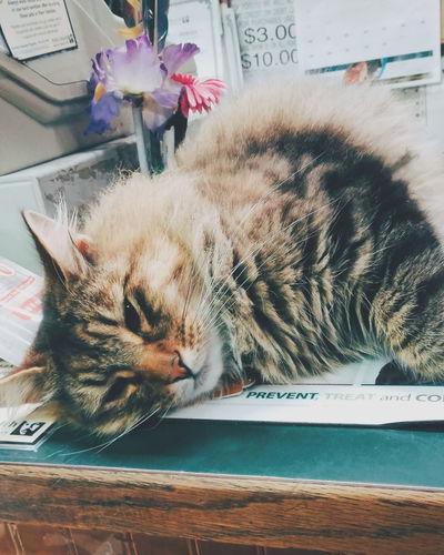 Felinelover Feline Feline Companions Catoftheday Cat Lovers Cat Smartphonephotography EyeEmBestPics My Best Photo 2015 Petstore Pet EyeEm Gallery Vscogrid Mobilephotography 2015  Vscocam VSCO Vscogood Pet Photography