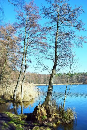 Water Tree Plant Tranquility Tranquil Scene Beauty In Nature Scenics - Nature Lake Nature Sky Day Blue No People Trunk Tree Trunk Branch Non-urban Scene Outdoors Growth Winter Lake View Lakeside Lakeshore Sunlight Summter See