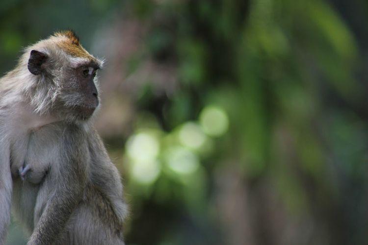 Baboon Tree Ape