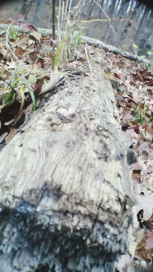 Tree Trunk Nature Close-up Textured  Outdoors Fall Beauty Leaves On The Ground