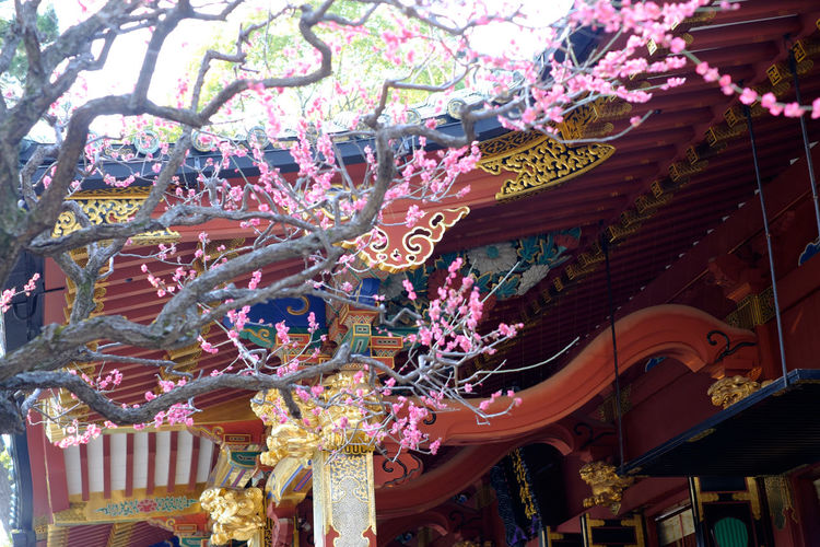 根津神社の梅 Cultures Flower Flowerporn Fujifilm Fujifilm X-E2 Fujifilm_xseries Japan Nezu Shrine Pink Plum Plum Blossom Religion Shrine Tokyo Xf35 Xf35mm ピンク 日本 東京 根津神社 梅