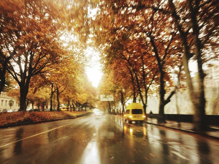 Tbilisi Loves You Our Autumn Mood What'syour Favorite Color