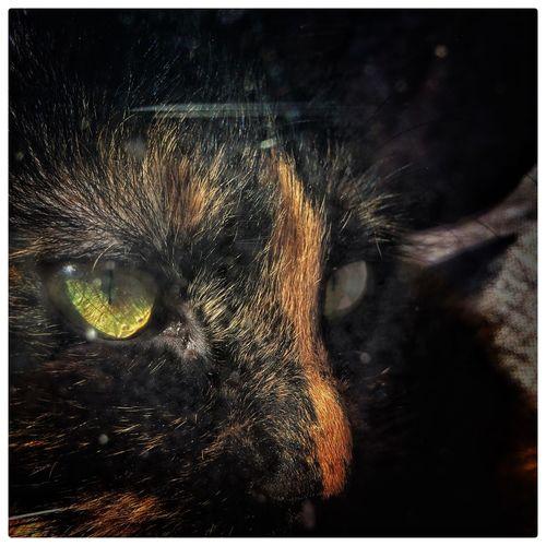 One Animal Domestic Cat Animal Themes Domestic Animals Mammal Pets Feline