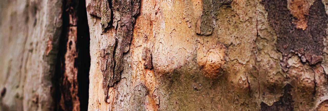 Full frame shot of old tree trunk