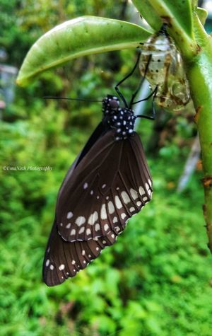Beauty in Nature-Butterfly EyeEm Best Shots EyeEm Nature Lover EyeEm Selects Butterfly - Insect Insect Animal Themes Close-up Green Color Butterfly Blooming Animal Antenna Stem Flower Head Growing In Bloom Petal Symbiotic Relationship Pollen Animal Wing Slug Mollusk Pollination Antenna