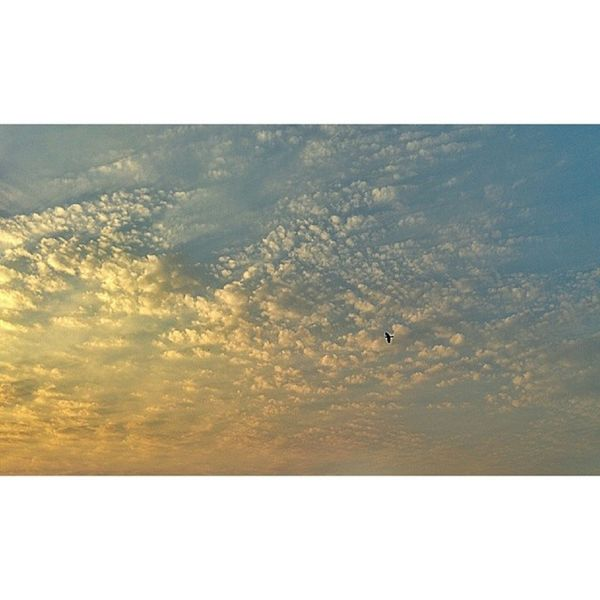 Birdie Cloudobsession
