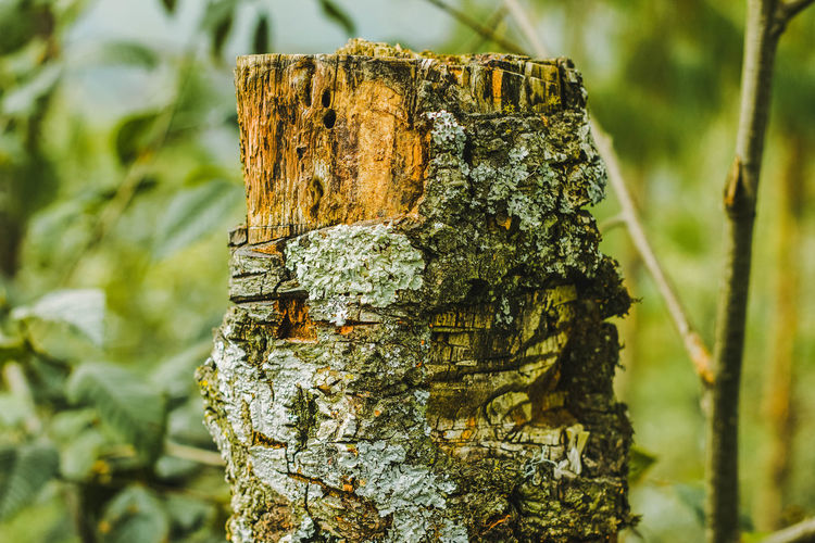 Tronco de árbol. Bark Close-up Day Focus On Foreground Forest Growth Land Lichen Moss Nature No People Outdoors Plant Plant Bark Rough Textured  Tranquility Tree Tree Trunk Trunk Wood - Material