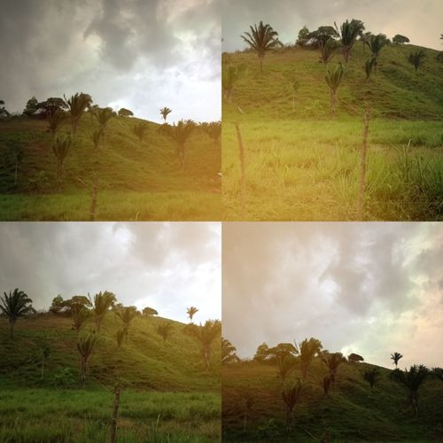 Shot and edited with the new Mosaicam app for iPhone | it's a fantastic app for selfies or beautiful landscape shots. Mosaicam