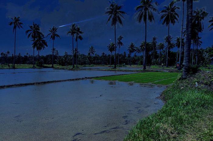 Palayan Province