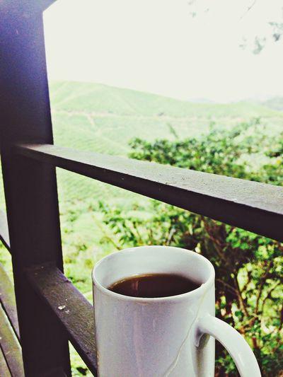 Green Tea Nice Atmosphere