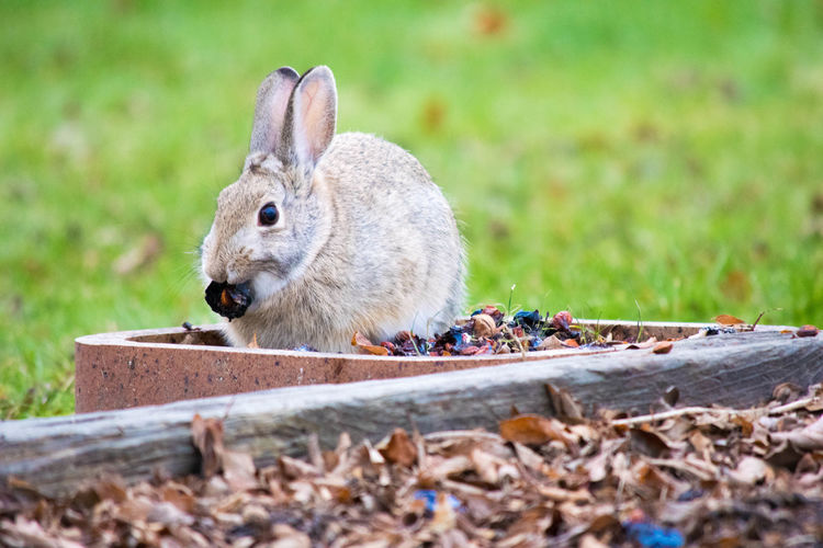 View of rabbit eating