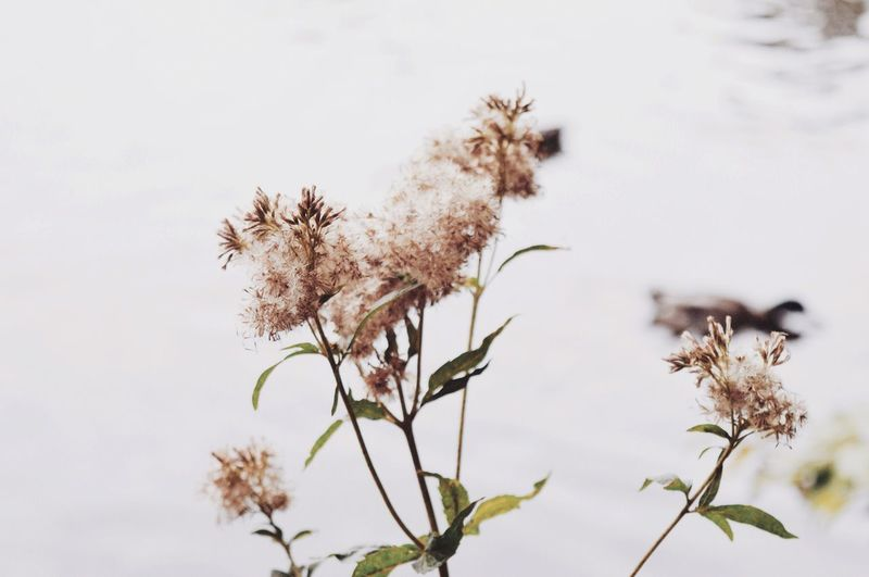 Flower Growth Nature Freshness Plant Blossom No People Outdoors Close-up Fragility Photography Beauty