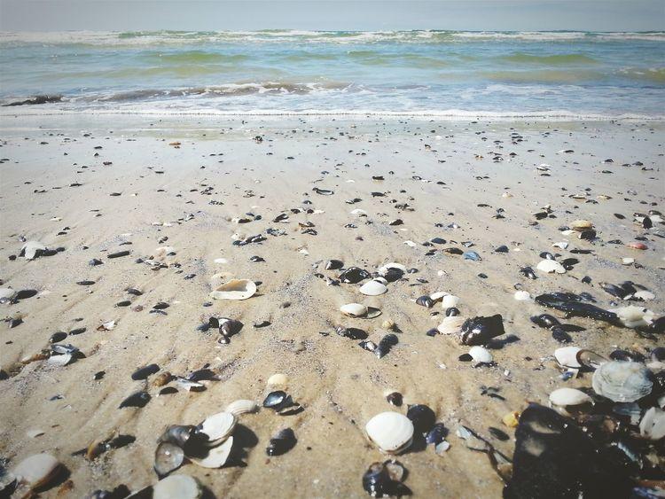 Sea Seashells