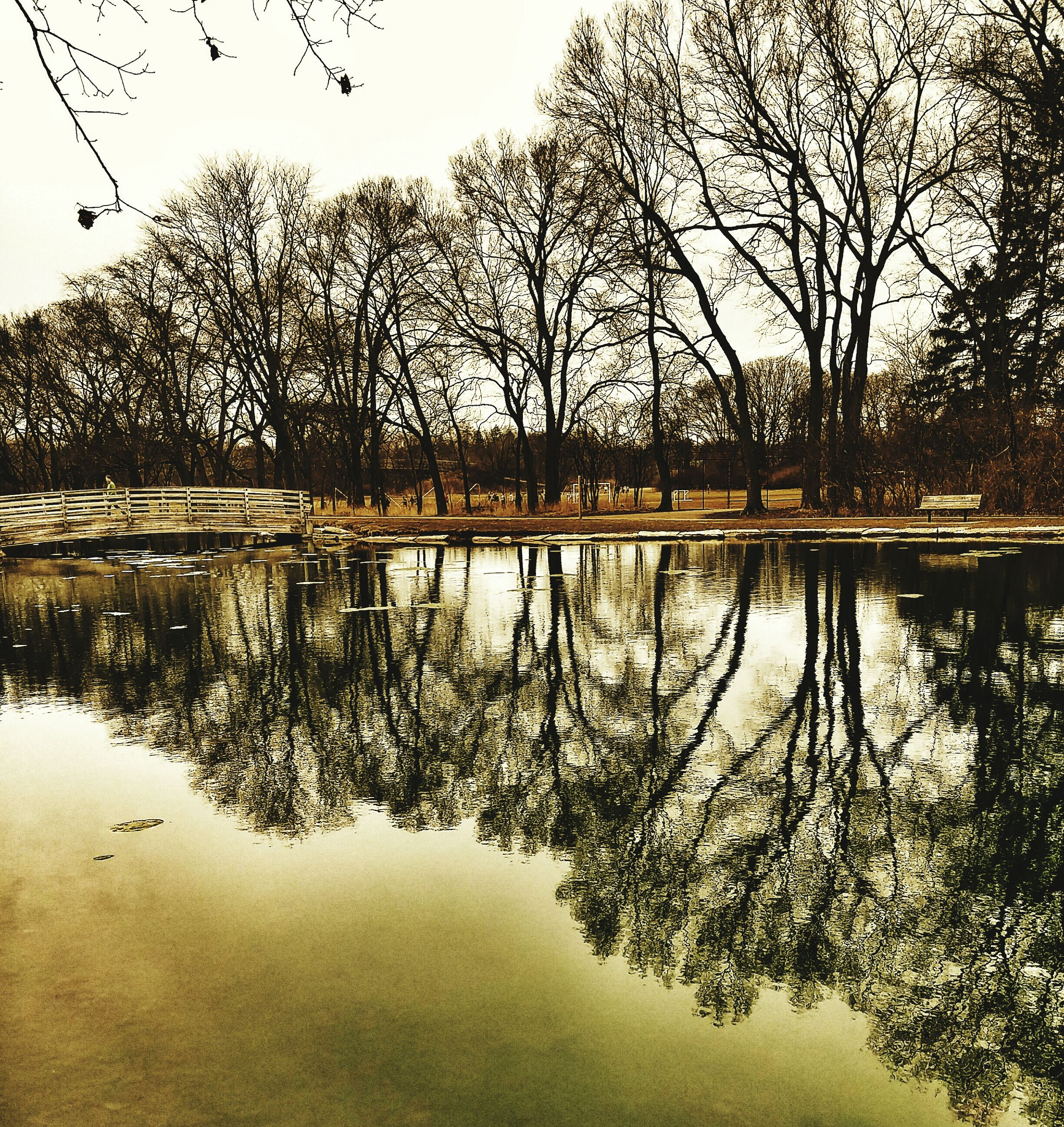 water, tree, reflection, lake, tranquility, tranquil scene, bare tree, branch, scenics, nature, beauty in nature, waterfront, lakeshore, standing water, clear sky, sky, river, idyllic, calm, non-urban scene