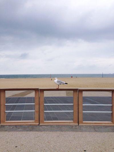 The Hague Schrevenigen Horizontal Seagull Northsea