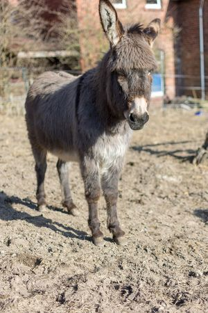 Rosie genießt die Sonne One Animal Mammal No People Pets Livestock