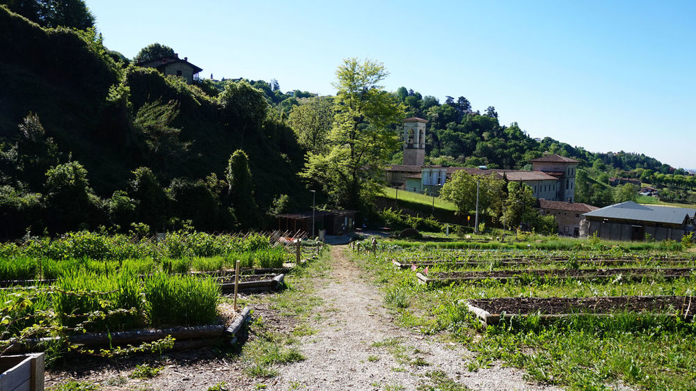 Orto Botanico, Astino, Bergamo Astino Astinoexpo2015 Botanic Garden Botanical Garden Botanical Gardens Botanicalgarden Corn Day Green Green Color Growth Nature Nature_collection Orto Botanico Orto Botanico Bergamo Outdoors People People Nature Persons Plantation Plantations Plants And Flowers Tree Volounteer Working Nature