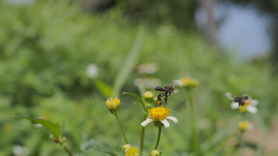 pollination Bees And Flowers Bee Pollinating Greenery Green Little Flowers Flower Insect Plant Yellow One Animal Nature Fragility Animals In The Wild Animal Wildlife Animal Themes Uncultivated Freshness Nature Reserve Beauty In Nature No People Day Growth Petal