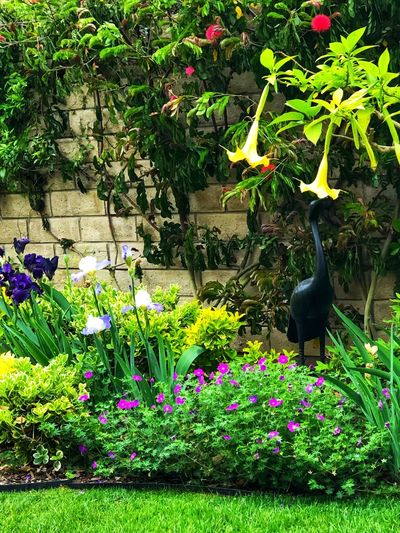 Purple flowering plants in yard