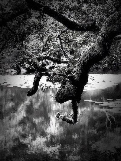 Bnw_friday_eyeemchallenge Bnw_tree Bnw_collection Bnw_captures Bnw_life