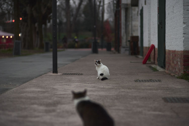 Cat sitting on footpath in city