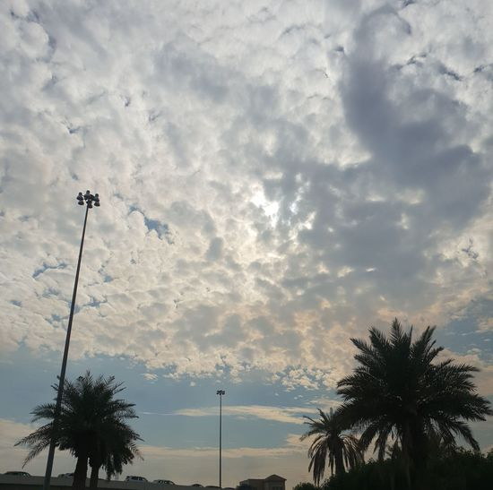 kuwait sky Kuwait❤ Kuwait City Kuwait I Love Kuwait Tree Palm Tree Sky Cloud - Sky