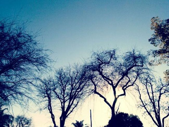 Tree Branch Tranquility Bare Tree Sky Clear SkyPhotography Silhouette Nature Low Angle View Outdoors Sunset Day No People Beautiful Nature Duskview Photog via Fotofall