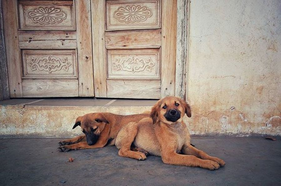 Thank you for pose Dogs Dogsofinstagram NeverSettle Oneplustwo Oneplustwophotography Oneplusindia @oneplus_in Oneplus2 Onepluslife Oneplus
