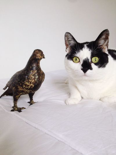 The cat and the pigeon Cat Pigeon Birds Funny Animals Animal Love Animals