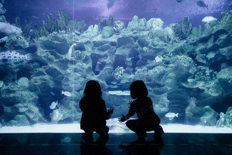 Aquaria Klcc Aquarium Calm Curious Explore Indoors  Kids Sea Sealife Silhouette Breathing Space