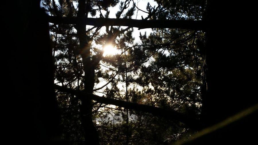 Sun & Trees Tandlehill Park Tree Trees Forest Tree Bark WoodLand Tree Shadow Tree Silhouette Tree Branches New Growth Tree Shadows Tree Shade Sun Beams