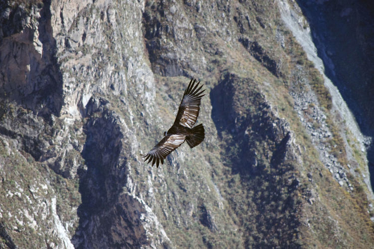 High angle view of eagle flying over rock