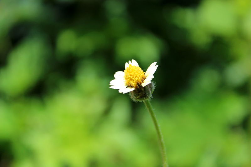 balapaku Balapaku Flower Beautiful Flower Close-up Flower Head Flower Fragility Nature Plant Insect Flower Head Petal Beauty In Nature No People Uncultivated Freshness Green Color Focus On Foreground Growth Outdoors EyeEmNewHere
