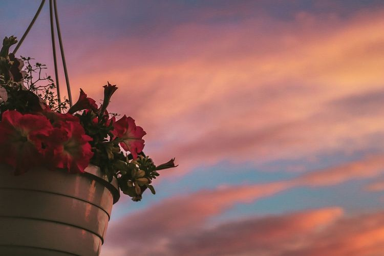 Low Angle View Of Potted Plant Hanging Against Sky During Sunset