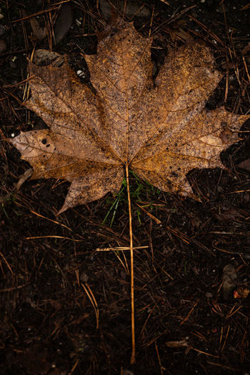 Plant Part Leaf Nature Plant No People Land Autumn Tree Close-up Day High Angle View Dry Outdoors Brown Forest Change Dirt Field Tranquility Leaves Mud
